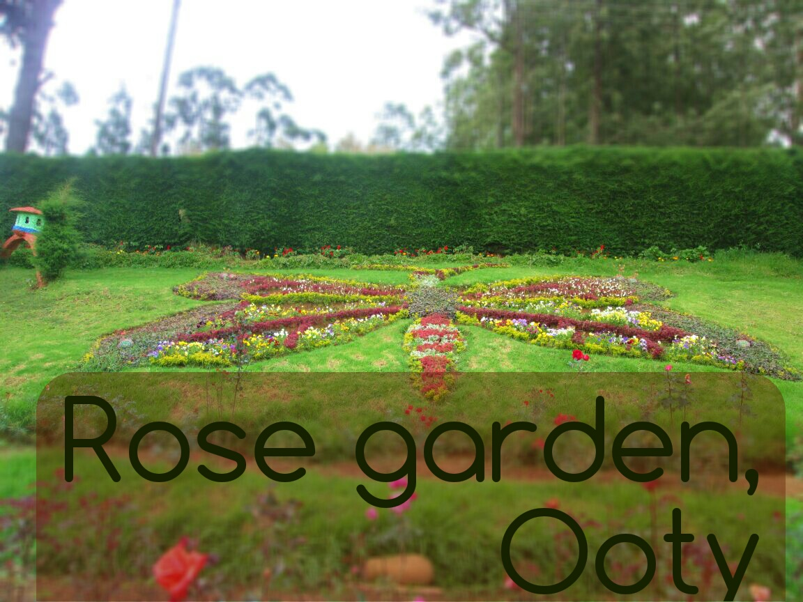 Roses, Roses and roses..Rose garden, Ooty